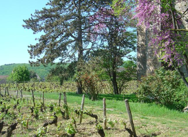 Gevrey Chambertin les champs et fleurs